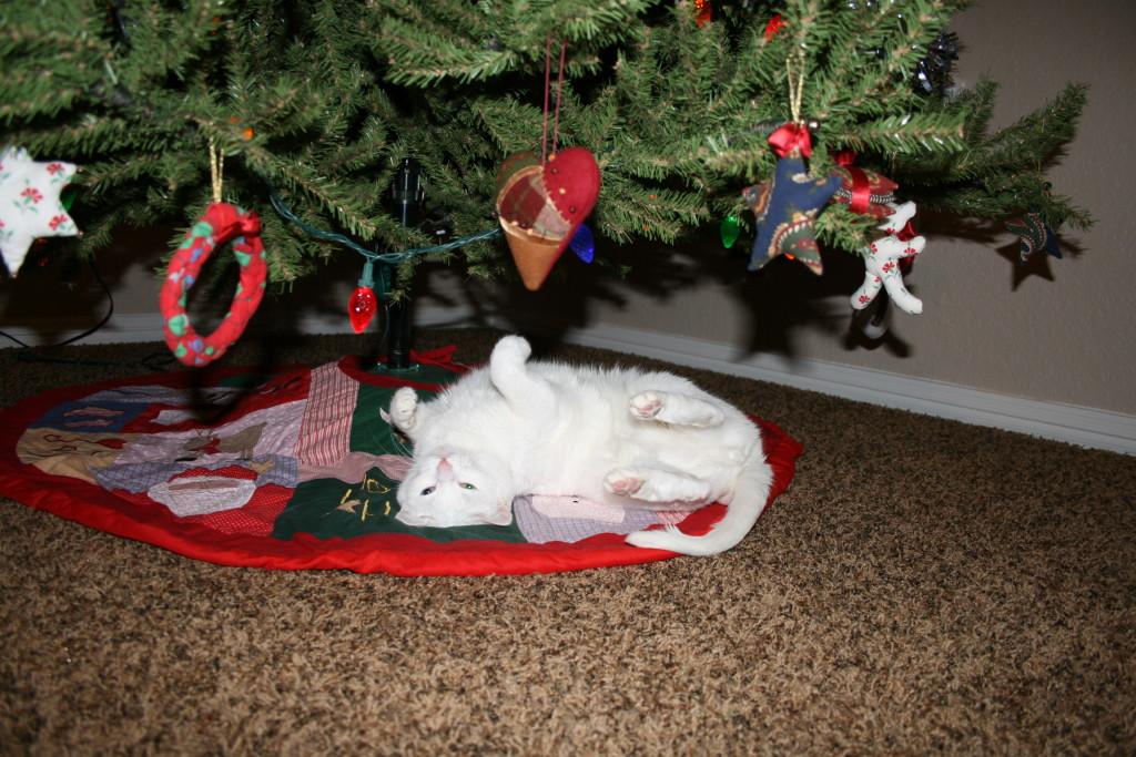 Merry Christmas From Kimba