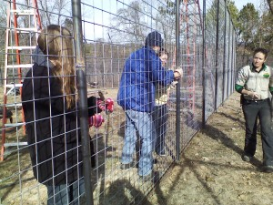 My husband and daughter, tying off a section of fencing for the welders.