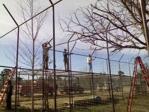 Glad I didn't have to climb up there! Volunteers securing fencing at the top of the new yard area. Glad the tiger living there was locked up tight.