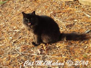 Abby's Secret Identity CatsStoriesDotCom 1