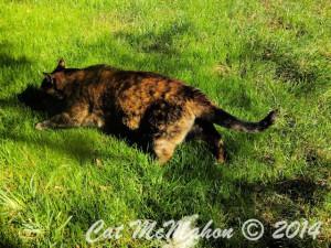 Abby's Secret Identity CatsStoriesDotCom 3