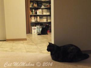 Abby's Secret Identity CatsStoriesDotCom 6