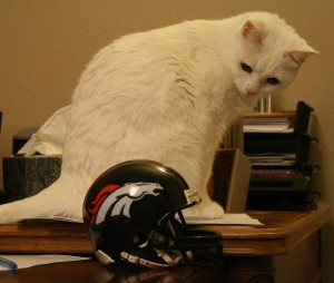 Kimba picks the Broncos to win because she's pretty sure even she could beat a Seahawk.